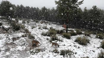 Nieve en el Centro del Lobo